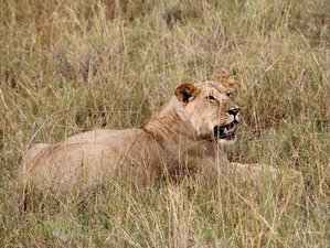 7 Days Maasai Mara to Amboseli Wildlife Safari in Kenya