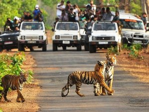 4 Days Tigers Tour Safari in Bandhavgarh National Park, India
