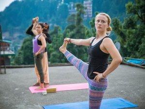 Self-Paced 200-Hour Online Multi-Style Yoga Teacher Training