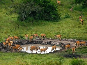 2 Days Lake Mburo National Park Safari in Uganda