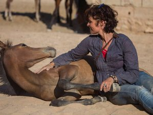 2 Days Horse Wisdom and Yoga Retreat in Jordan