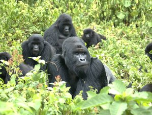 3 Days Uganda Safari and Gorilla Tracking Experience in Bwindi