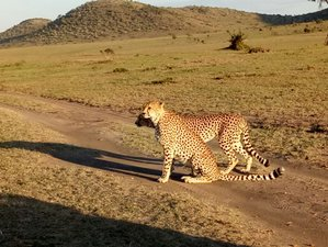5 Days Exciting Budget Safari Tour in Kenya
