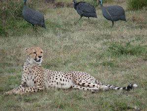 3 Days 2 Nights Masai Mara Wildlife Safari