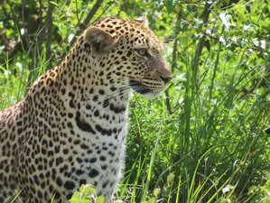 7 Days Amazing Kenya Safari in Masai Mara, Lake Nakuru, Lake Naivasha, and Amboseli National Parks