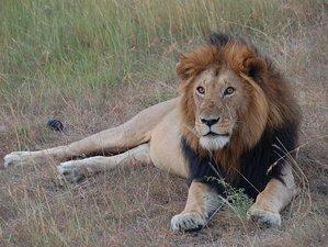 3 Days Maasai Mara Safari in Kenya