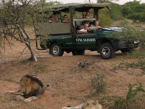 3 Days Budget Big-Five Safari in Kruger National Park, South Africa