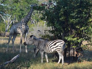 4 Days Authentic Mobile Tented Camping Safari Chobe National Park and Moremi Game Reserve, Botswana