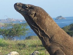 3 Days Komodo Jurassic Park Tour in East Nusa Tenggara, Indonesia