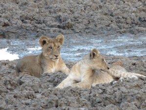 2 Days Classic Safari in Mikumi National Park, Tanzania