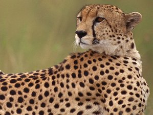 6 Days Tanzania Safari from Tarangire National Park to Ngorongoro Conservation Area