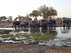7 Day Awesome Safari in Chobe and Okavango Delta, Botswana