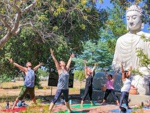 4 Days Digital Detox Yoga Retreat for Beginners in Idyllic San Diego, USA