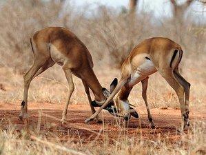4 Days Private Safari in Kenya