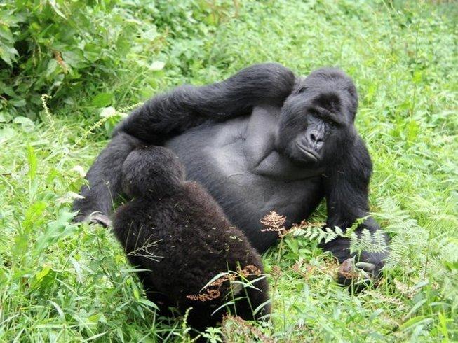 10 Days Great Apes Uganda Safari