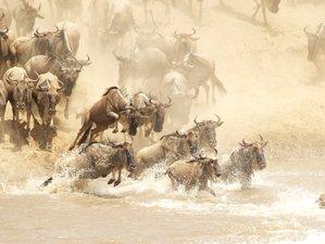 10 Days Serengeti National Park Great Migration Crossing Safari in Tanzania