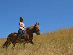 8 Day Intensive Beginner Horse Riding Holiday in Hersonissos, Crete