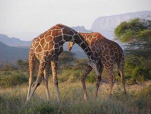 4 Days Budget Masai Mara Safari in Kenya