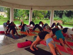 22 Day 200-Hour Multi-Style Yoga Teacher Training in Rishikesh, Uttarakhand
