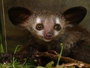 11 Days Lemur Sanctuary Tour in Madagascar