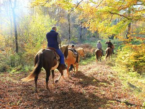 4 Day Incredible Forest Tours on Horseback at a Western Style Ranch in Kočevsko, Slovenia
