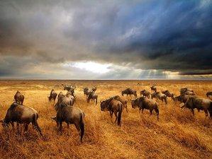 4 Days Join Group Camping Safari to Tarangire, Serengeti, and Ngorongoro Crater in Tanzania