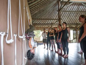 8 Days 50-Hr Chinese Medicine Yoga Teacher Training Fiji