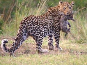 3 Days Roundtrip Safari in Maasai Mara Game Reserve from Nairobi City