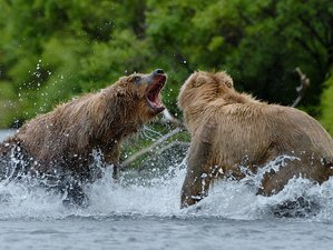 8 Day Bear Photo Safari in Katmai National Park, Alaska