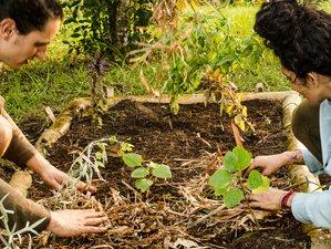 6 Day Live Closer to Nature: Ayurveda and Yoga Lifestyle Wisdom Retreat in Xico, Veracruz