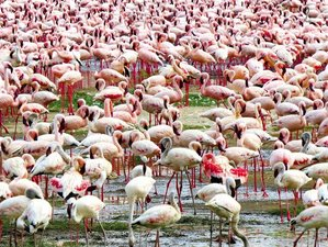 5 Days Hell's Gate, Lake Nakuru, and Masai Mara Awesome Safari in Kenya