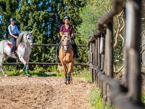 1 Month Work Remote with Dressage or Trail Riding on Beautiful Mallorca, Balearic Islands