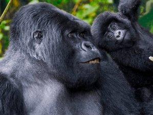 10 Days Wildlife Safari in Uganda