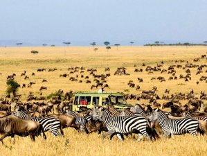 7 Days Affordable Safari in Kenya