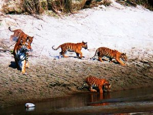 5 Days Safari in Bardia National Park Safari, Bardiya