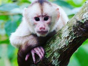 3 Day Wildlife Tour in Yasuni Biosphere Reserve, Ecuador
