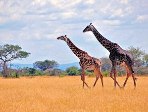 7 Days Kruger National Park Safari in South Africa