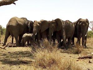 2 Day Amazing Safari in Tanzanian Northern Circuit