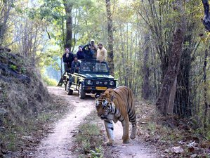 4 Days Tiger Safari in India