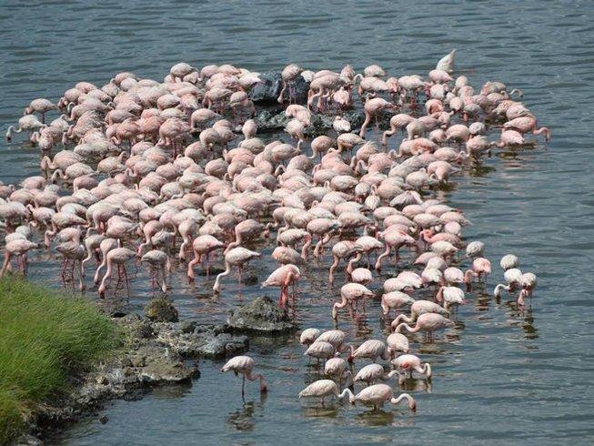 7 Days Walking Safari in Arusha Region, Tanzania