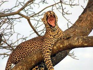 9 Days Marvelous Budget Kenya and Uganda Safari