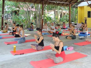 8 Days Ayurvedic Juice Detox, Meditation and Yoga Retreat Thailand