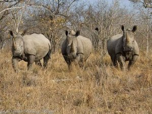 4 Days Kruger National Park Safari Limpopo, South Africa