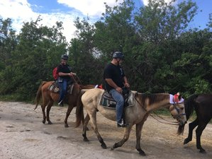 3 Day Wildlife Rescue Farm Horse Riding Holiday in Merritt Island, Florida