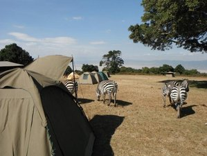 5 Days C&ing Safari in Tanzania & 5 Days Camping Safari in Tanzania - BookAllSafaris.com