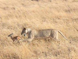 "10 Days""All I Ever Wanted"" Safari in Tanzania"