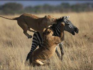 7 Days Lifetime Wilderness Tanzania Safari