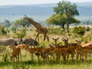 2 Days Thrilling Mikumi National Park Tanzania Safari