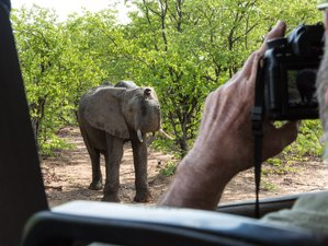 Theme: Photography Safaris