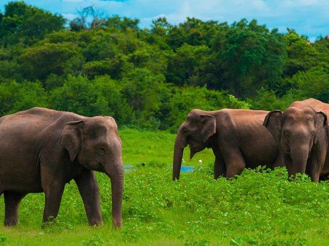 10 jours en stage de yoga, méditation et relaxation en Province Centrale, Sri Lanka